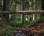 A fallen tree over a small creek along the trail to Cheakamus Lake