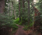 The beautiful, forested hiking trail to Cheakamus Lake near Whistler, BC
