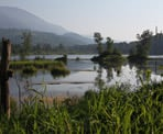 A scenic view of Cheam Lake Wetlands in Chilliwack, BC