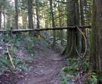 The trails pass through lush forests in the Chilliwack Community Forest