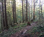 The Upper Canyon Trail in the Chilliwack Community Forest