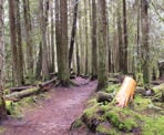 A hiking trail at Cliff Gilker Park near Roberts Creek, BC