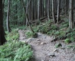 The Cedar Mills Trail along the route to Coliseum Mountain in Lynn Headwaters Regional Park