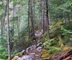 The steep Cool Creeek Canyon trail, north of Pemberton, BC
