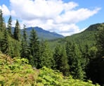 One of the first views as you hike up the steep hill towards Loggers Lake in Whistler