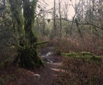 The trail to Crystal Falls in Coquitlam can be very muddy after a heavy rainfall