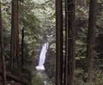 The view of the upper waterfall of Cypress Falls between the trees