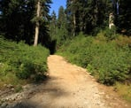 The start of the Ridge Trail behind Grouse Mountain takes hikers into the backcountry