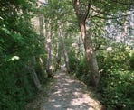 The Dyke Loop Trail on Deas Island, south of Vancouver