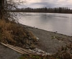 The shore of the Fraser River in Derby Reach Regional Park, Langley