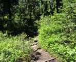 The trail to Dog Mountain can be rough and slippery, with lots of tree roots and rocks
