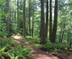 The forest trail to Dorman Point on Bowen Island