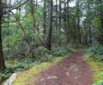The trail to Dorman Point in Crippen Regional Park on Bowen Island