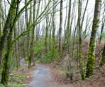 The wide trail descends into Downes Bowl from the Discovery Trail near the fields at Clearbrook Park