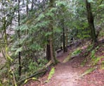 A hiking trail in Downes Bowl in Abbotsford