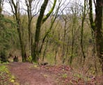 A trail near the highest point in Downes Bowl in Clearbrook Park in Abbotsford