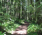 The forest trail that climbs to the top of Elk Mountain in Chilliwack, BC