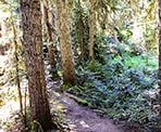 The forested trail to Falls Lake