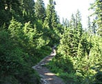 The Ridge Trail takes hikers from Grouse Mountain into the backcountry towards Goat Mountain