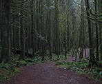 The forested section of the hike to Gold Creek Falls