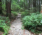 The rocky trail that leads to Golden Ears