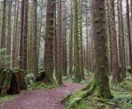 The trail near the East Canyon Trail in Golden Ears Provincial Park