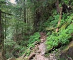 The rugged section of the West Canyon Trail in Golden Ears Provincial Park