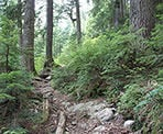 The trail from the Mount Seymour parking lot to Goldie Lake