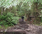The endless, steep stairs on the Grouse Grind hiking trail