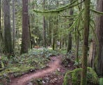 A hiking trail in the scenic Hidden Grove north of Sechelt