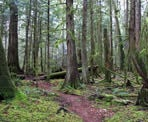 A trail passes through the scenic forest in Hidden Grove