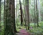 The trails in Hidden Grove pass my some old growth Douglas Fir trees