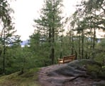 A bench at the top of the yellow trail in Hidden Grove north of Sechelt