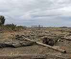 Washed up logs along Iona Beach in Richmond, BC