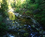 Kanaka Creek in the summer time in Maple Ridge, BC