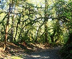 The hiking trail to to the salmon hatchery in Kanaka Creek Regional Park