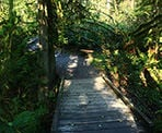 A small bridge on one of the trails in the Cliff Falls area of Kanaka Creek Regional Park