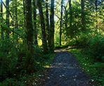 The wide, gravel trail through the Cliff Falls area of Kanaka Creek Regional Park
