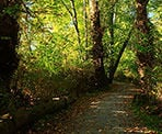The walking trails at Kanaka Creek Riverfront during the summer