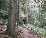 The forested trail around Killarney Lake on Bowen Island