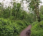The forested Ledgeview Trail in Abbotsford