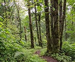 Scenic forests along the Ledgeview Trails in Abbotsford