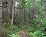 The Copperbrush Trail near Levette Lake, Squamish, BC