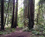 The forested Arbutus Trail in Lighthouse Park