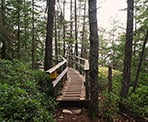 A wooden walkway near the Juniper Loop in Lighthouse Park