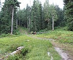 The trail heads uphill through the forests near the area where the old Hollyburn Lodge was located