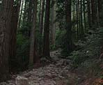 The rocky trail to Lynn Peak climbs quickly through the forest
