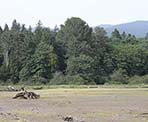 A view of the mud flats in the Maplewood Flats Conservation Area of North Vancouver