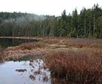 The marshy area surrounding Mike Lake in Golden Ears Provincial Park