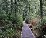 Wooden boardwalks on the short trail that wraps around Mike Lake